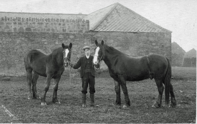 Alexander Lawrie with horses at Ramrig, Berwickshire, circa 1911.